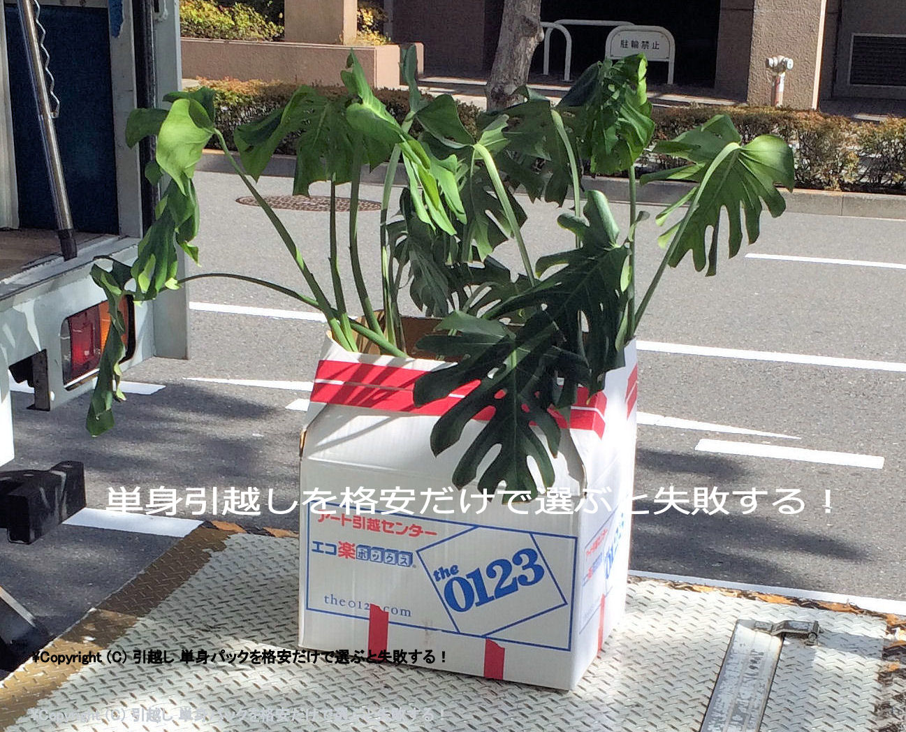 引越し 植木鉢